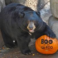boo-bear-200x200