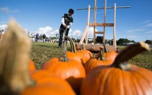 pumpkin-launch5