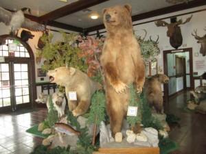 la-habra-children-s-museum