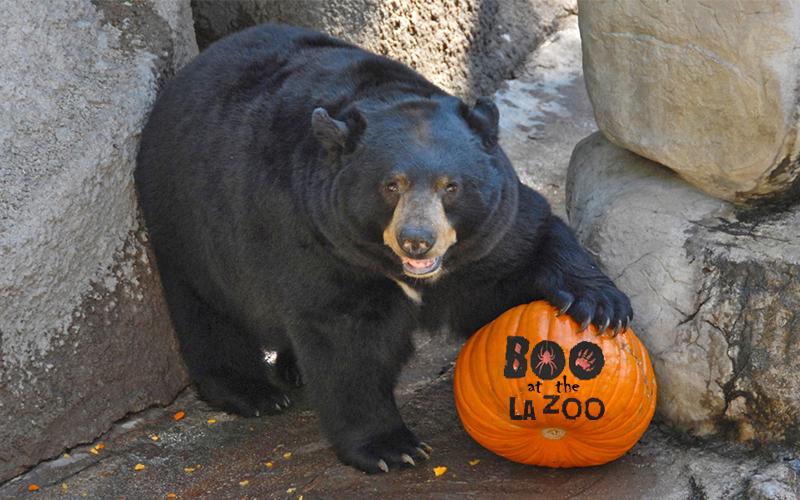 Boo-at-the-Zoo-bear