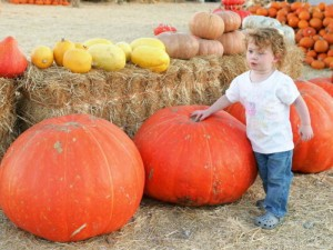 LAS VEGAS - OCTOBER 11:  Two-year-old Olivia Bailey walks by large pumpkins at Stu Miller's Pumpkin Patch October 11, 2006 in Las Vegas, Nevada. Halloween is October 31.  (Photo by Ethan Miller/Getty Images)
