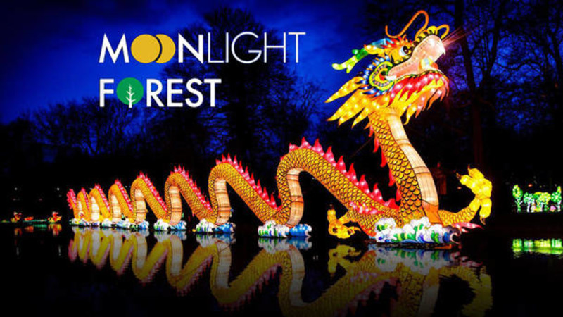 Moonlight Forest – Lantern Art Festival